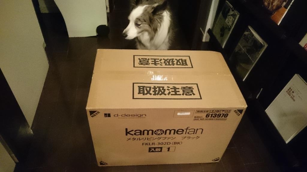 カモメファン (1)
